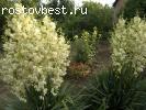 Продаю дачу с домом в 3 км от Ростовского моря